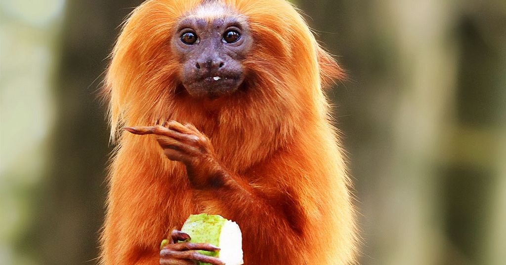 Funny Monkey Meme In Spanish : What kind of monkey are you playbuzz