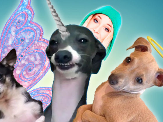 Kermit The Dog Smiling Jenna Marbles | www.pixshark.com ...