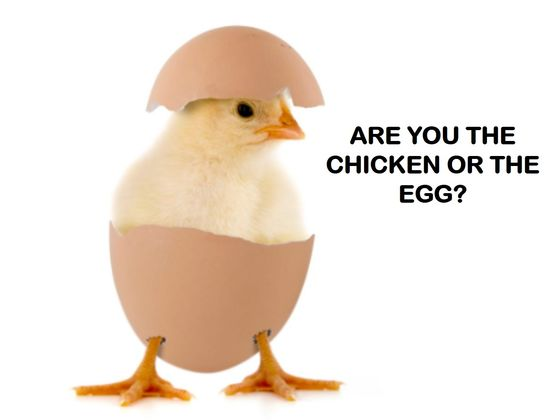 Are You A Rooster, A Chicken, Or An Egg? | Playbuzz