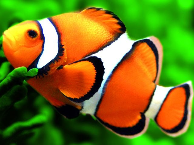 Only 5 can pass this animal vocabulary quiz can you for Plural of fish