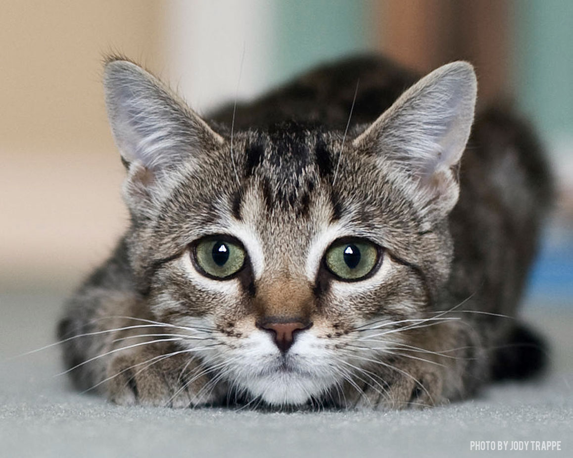 What Is The Absolute Perfect Cat Breed For You