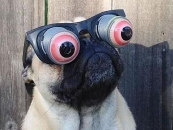 15 Hilarious Pug Memes Playbuzz