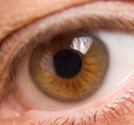 Картинки по запросу צבע עיניים דבש בהיר