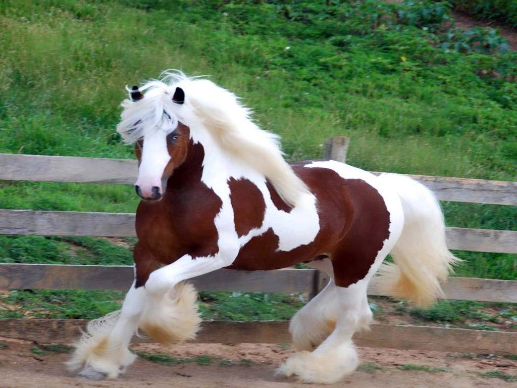 Beutiful Houses The Most Beautiful Horses In The World  Playbuzz