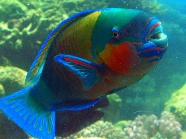 Can you name these types of fish playbuzz for Names of fish
