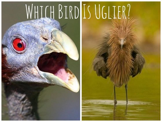 We Can Tell You How Honest You Are Based On The Animals You Think Are Ugliest!