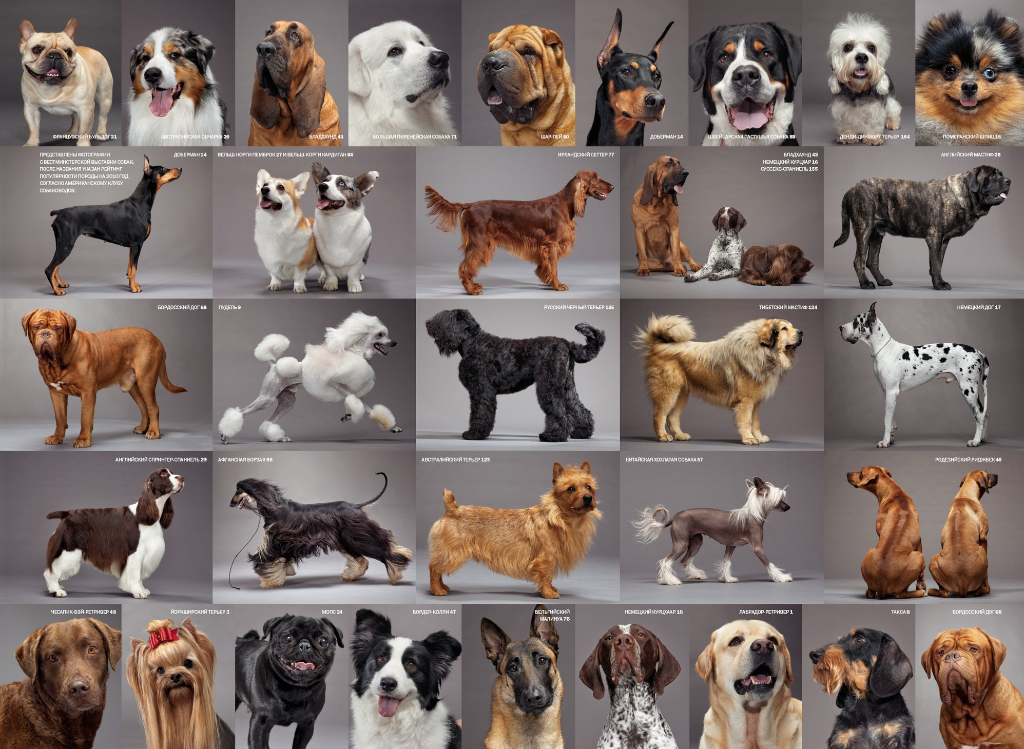 картинки собак разных пород с названиями
