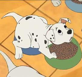 Simple Dalmation Chubby Adorable Dog - ce597112-deb3-4af4-9118-2d6ebad8e9fa  Gallery_99737  .jpg