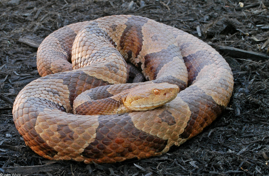 can you name the snake playbuzz