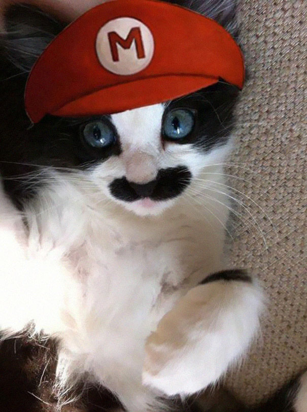 Rank The Best Cat Halloween Costumes | Playbuzz