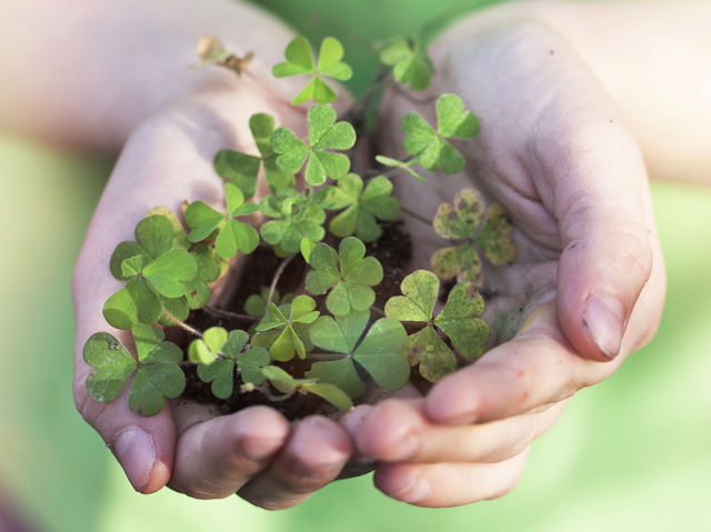 finding a four leaf clover odds The odds of picking a perfect bracket in the ncaa men's basketball tournament are really, really small odds of finding a four-leaf clover: 1 in 10,000.