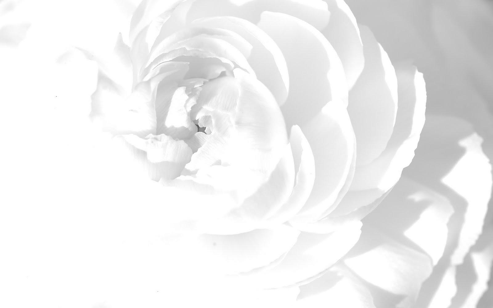 Background Photos Tumblr Black And White Black White Background 2
