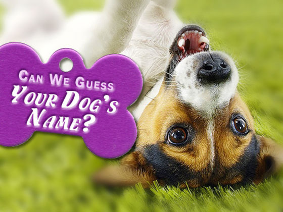 Can We Guess Your Dog's Name?