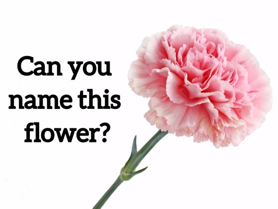 We bet you cant name these 20 most common flowers just by looking we bet you cant name these 20 most common flowers just by looking at mightylinksfo