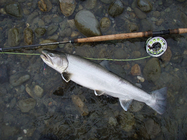 Angler s challenge can you identify these 8 freshwater for Dolly varden fish