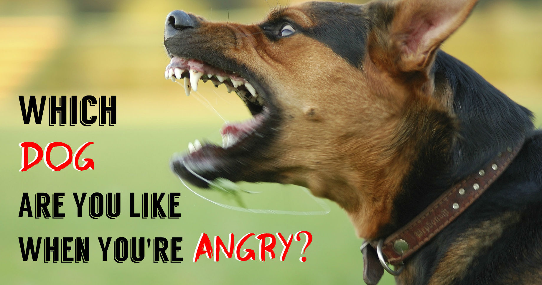Which Dog Are You Like When You Re Angry Playbuzz