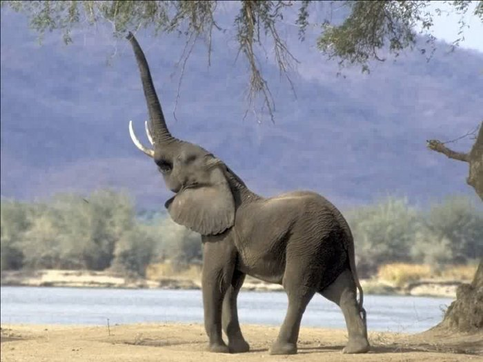 17 Elephants Who Are So Adorable It Hurts | Playbuzz