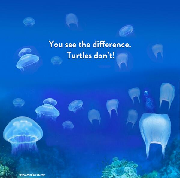 Image result for plastic bag vs jellyfish