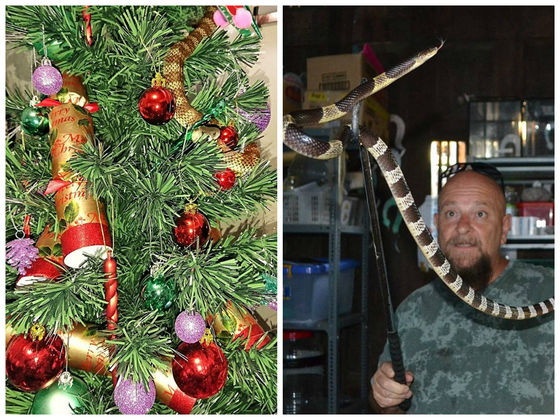 An Australian Woman Found A Snake In Her Christmas Tree