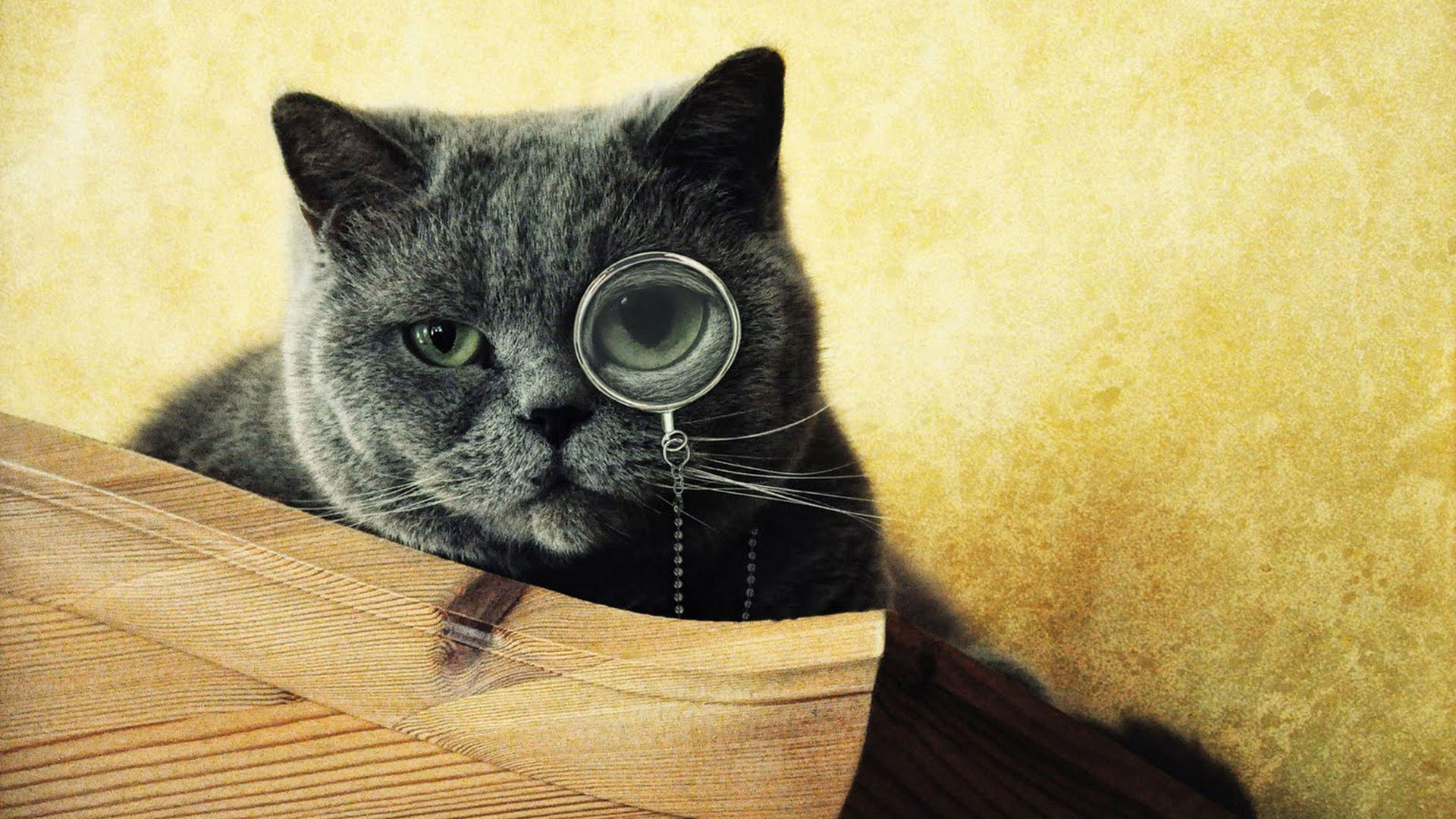 Кем был кот в прошлой жизни был