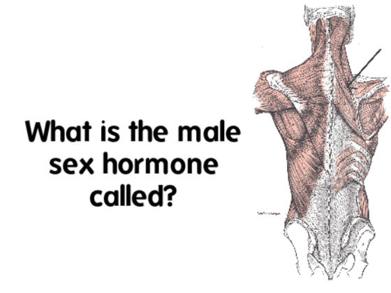 Only 1 In 10 Women Can Pass This Male Anatomy Test! | Playbuzz