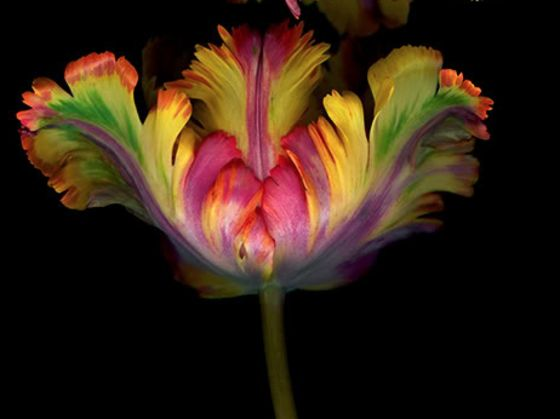 exotic flowers for your valentine and their meaning  playbuzz, Beautiful flower