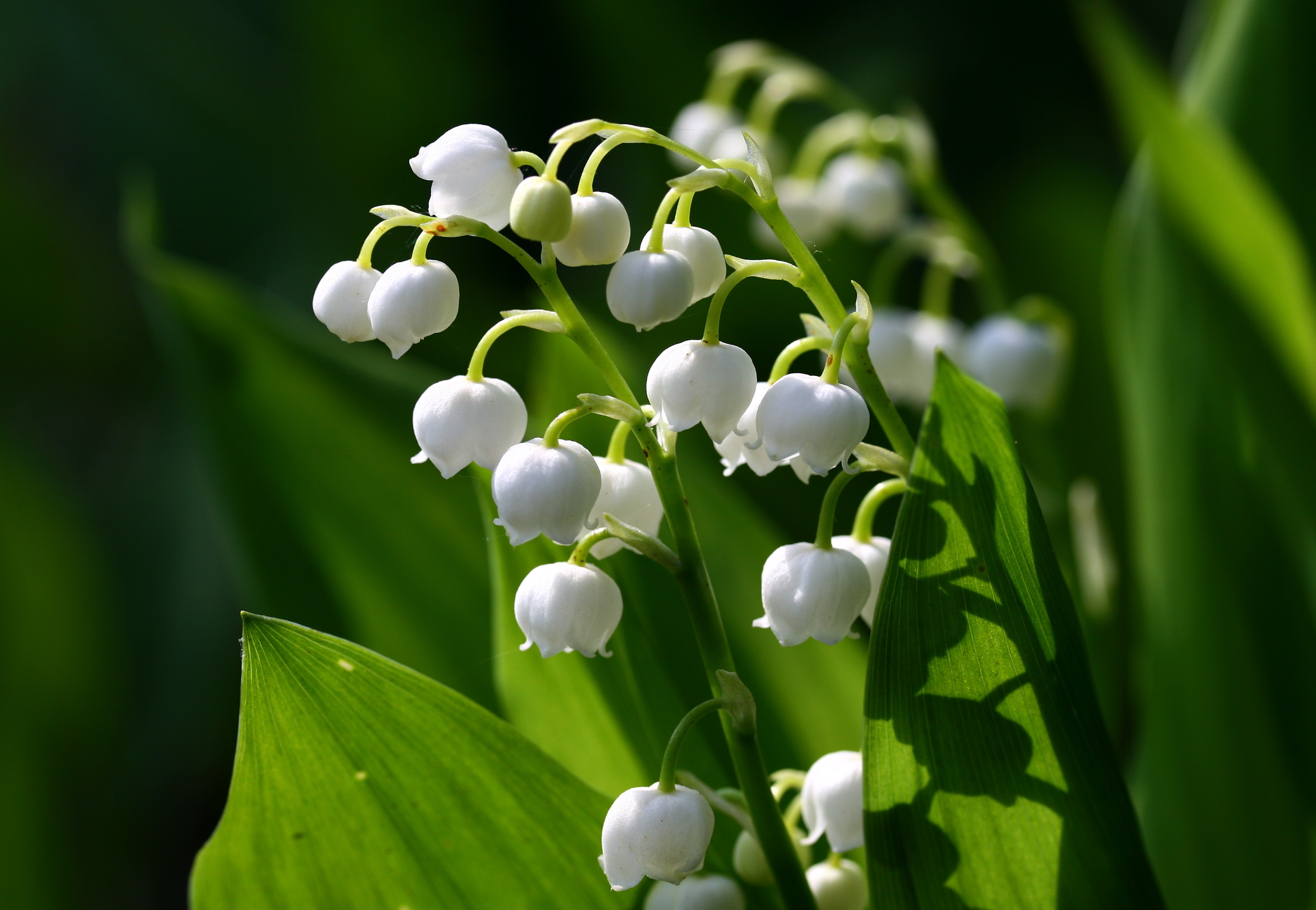 Nobody Can Name All 19 Of These Common Flowers Playbuzz