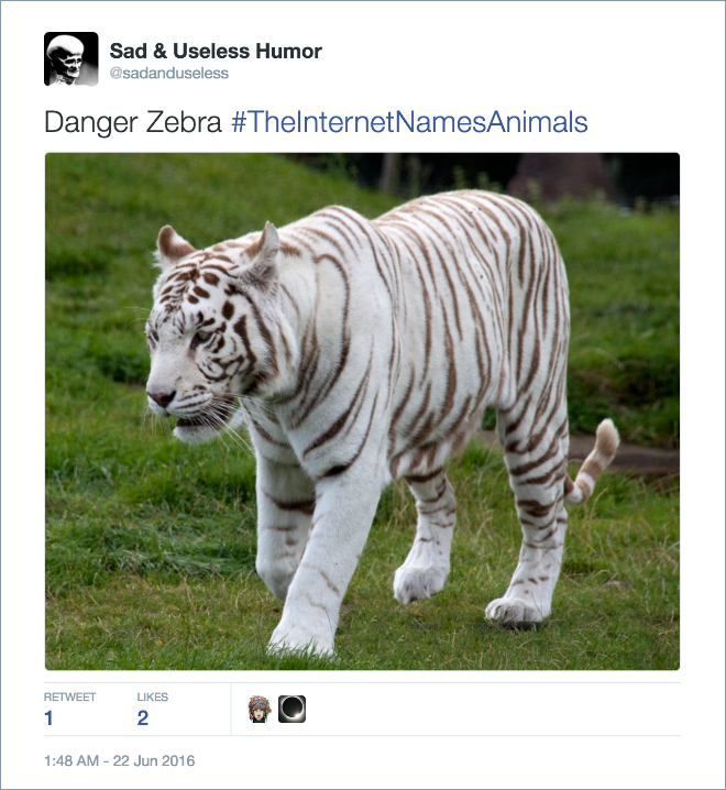 theinternetnamesanimals is renaming animals and you have to see