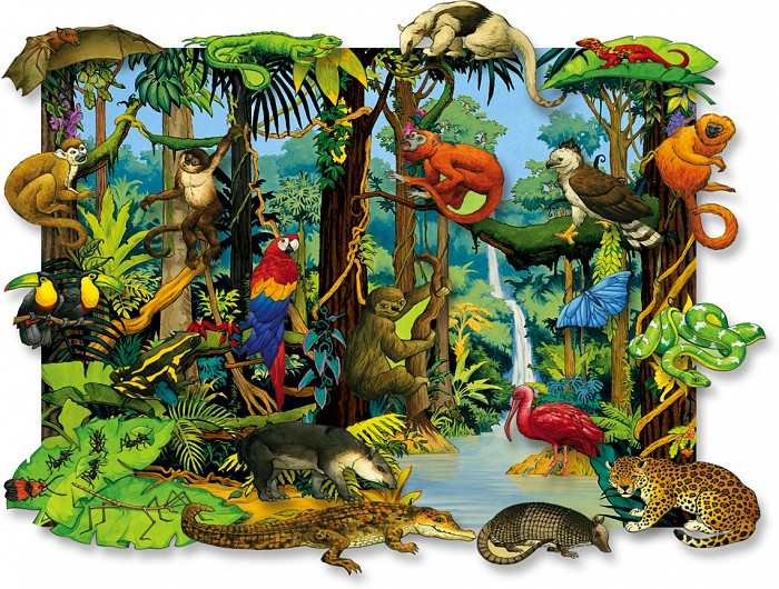 What Rainforest Animal Are You? | Playbuzz