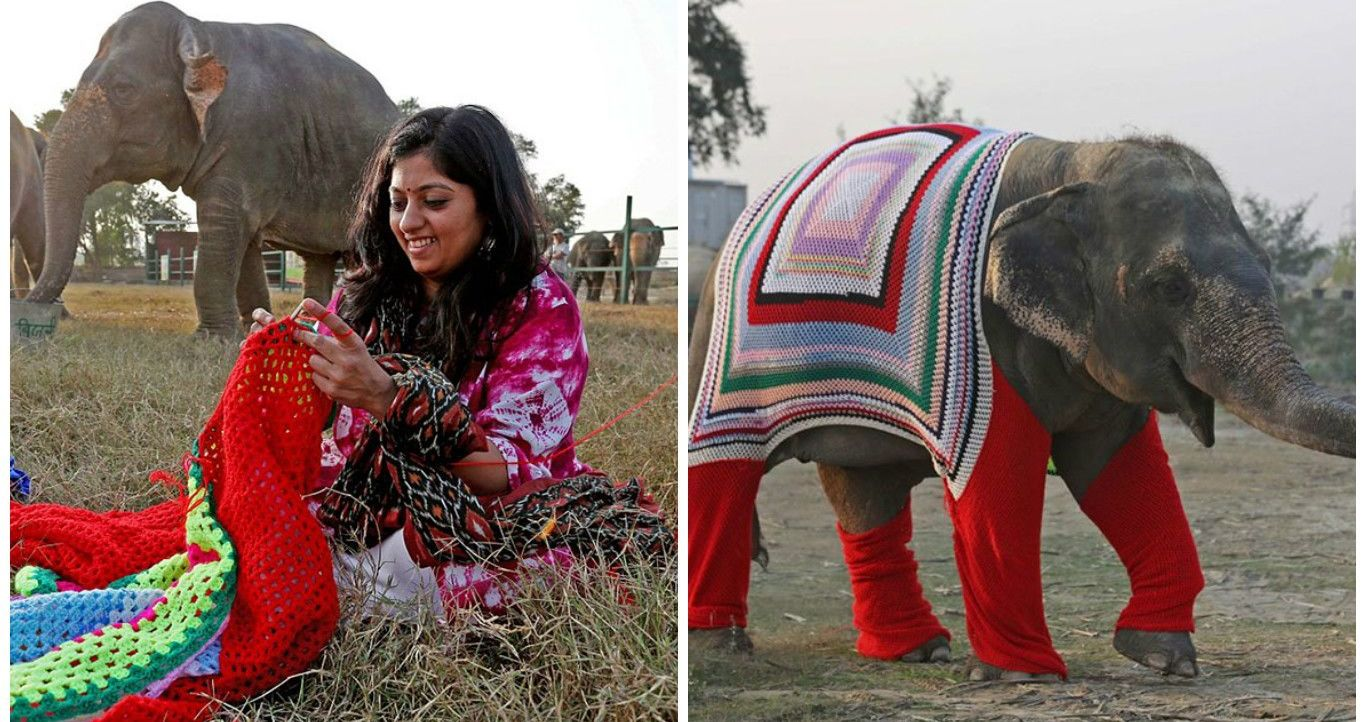 Knitting Personality Quiz : People are knitting sweaters to keep rescued elephants