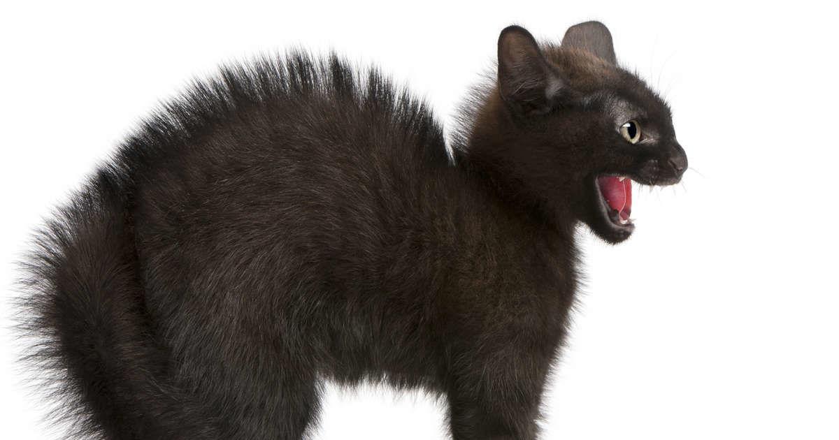 Katzen Haben Angst Vor Gurken