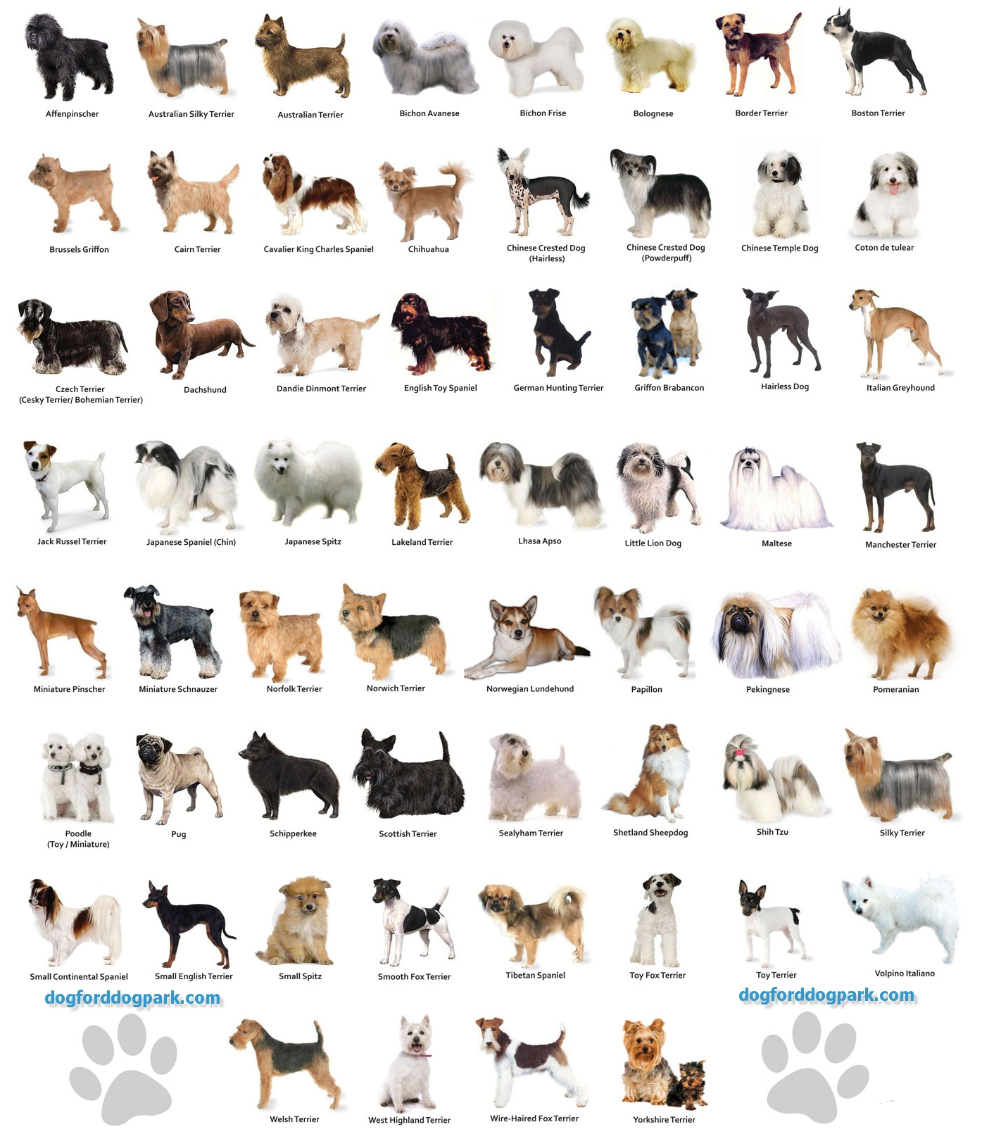 Dog Breed Names That Start With A C