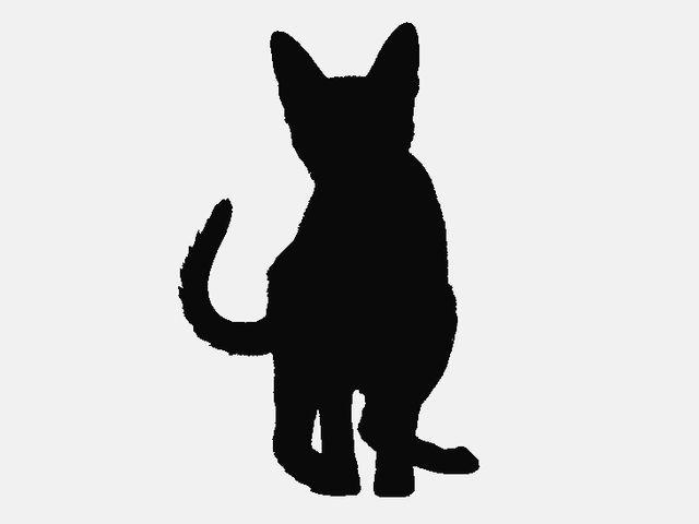 Erkennen sie die katzenrasse am scherenschnitt playbuzz - Scherenschnitt sterne ...