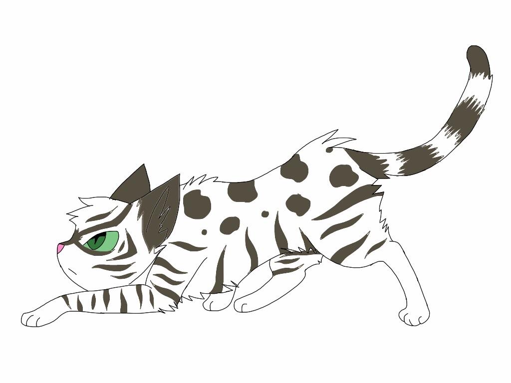Warrior Names For Cats Cat Hd Wallpaper Utsprokids How