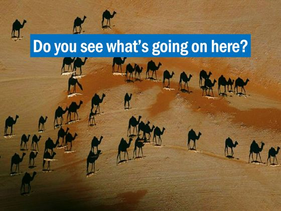 The Camels You See Are Not What You Think They Are
