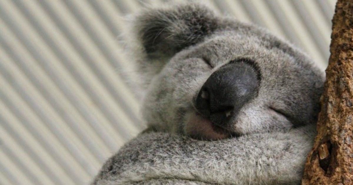 Top Adorable Animals Playbuzz