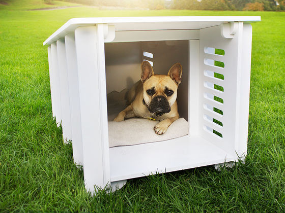 Pick Your Favorite Puppies And We'll Show You Your Dog's Dream House!