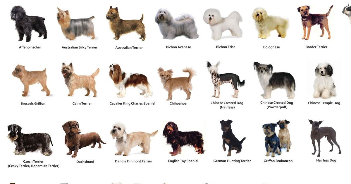 Dog Breed Identification Guide