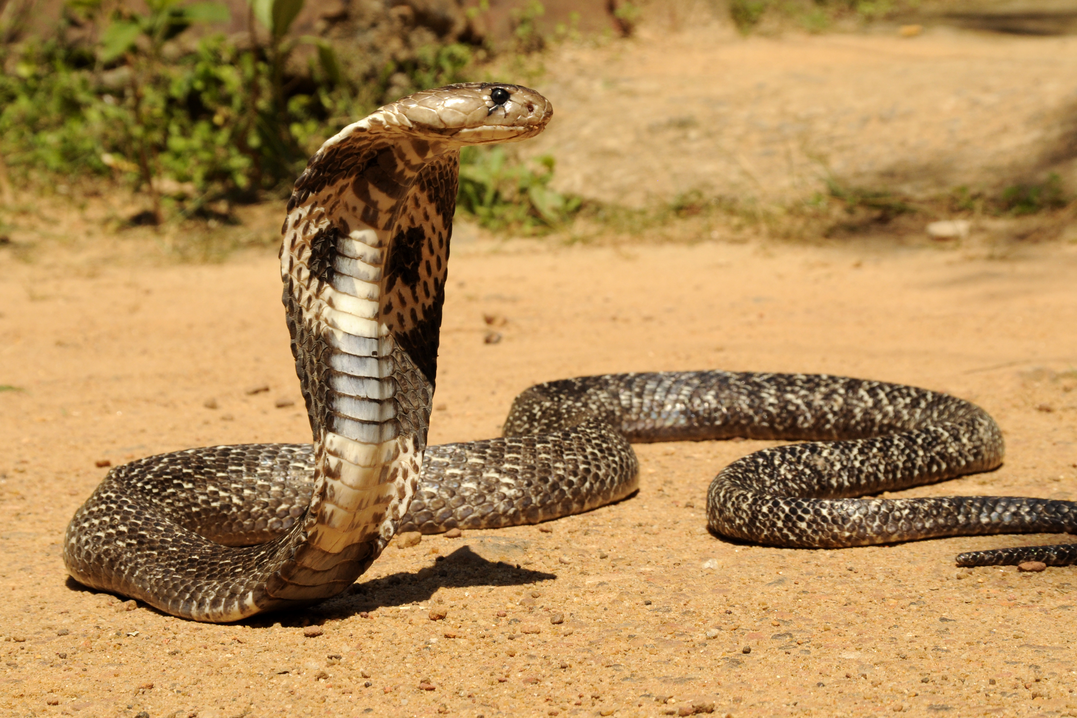What Kind Of Snake Are You?   Playbuzz