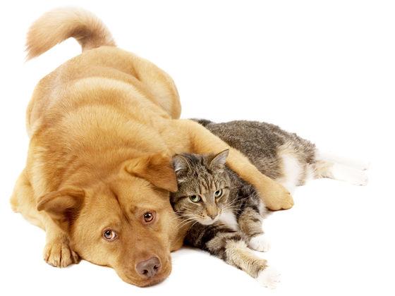 кот и пес картинки