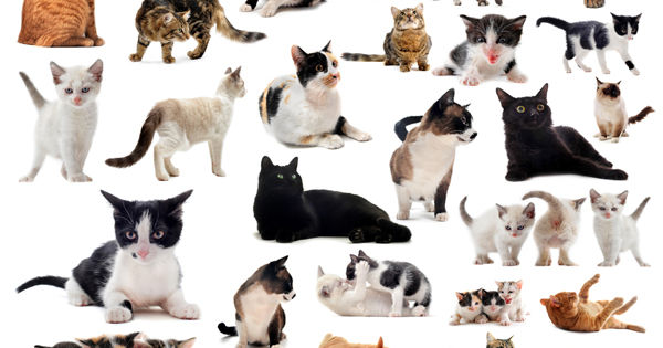 how to find out what breed my cat is