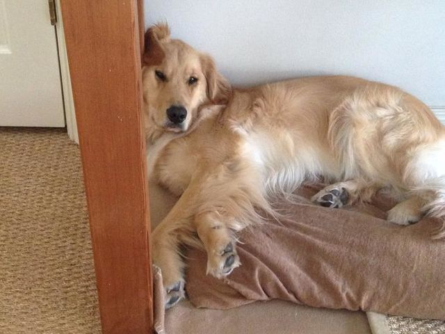 25 Dogs Who Are True Canine Couch Potatoes