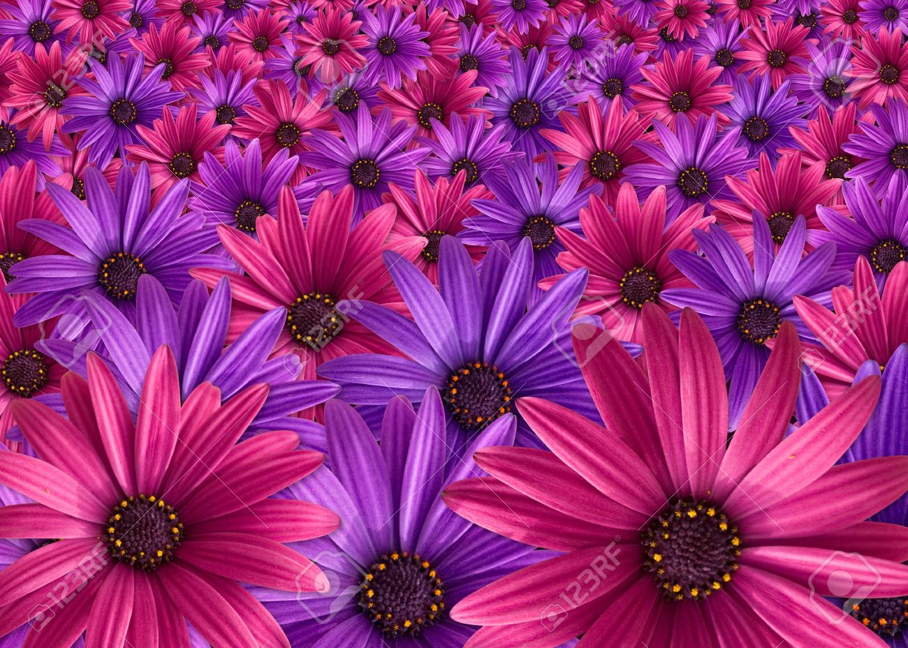 Pictures of pink and purple flowers image collections flower pink or purple flowers image collections flower decoration ideas what is your personality color playbuzz mightylinksfo mightylinksfo