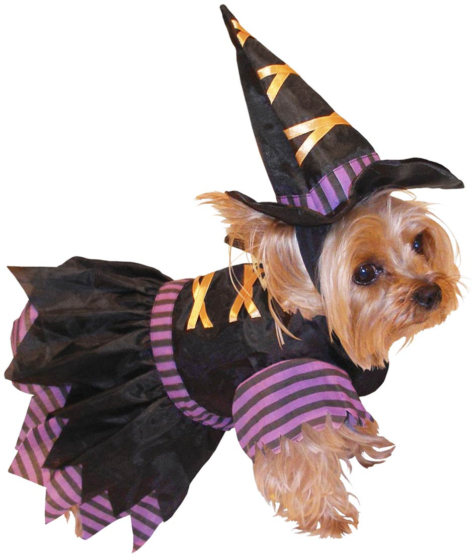 Maximum Pop!: What should your pet dress up as for Halloween based ...