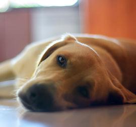 Should I Take Dog For Walk After Eating