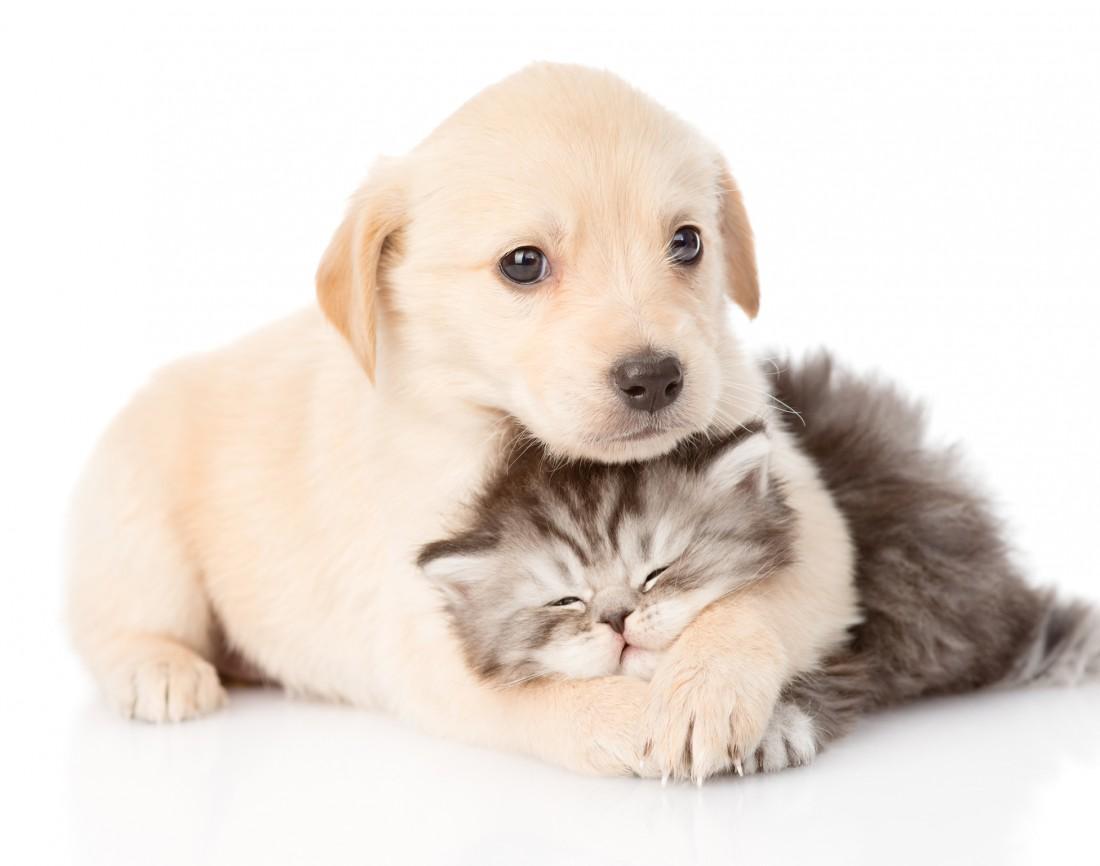 Znalezione obrazy dla zapytania dog cat
