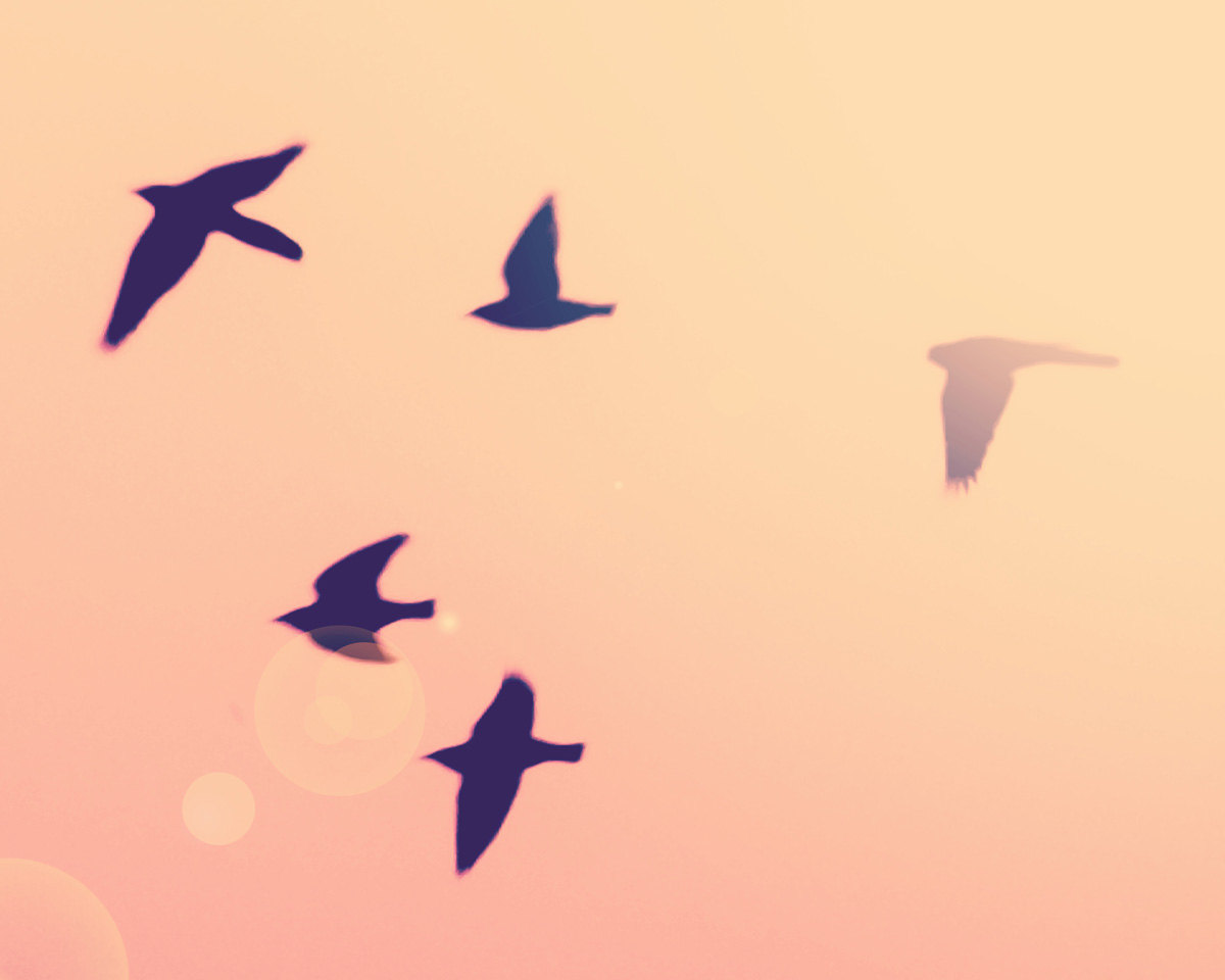 Perfect Flying Bird Wall Art Sketch - Wall Art Collections ...
