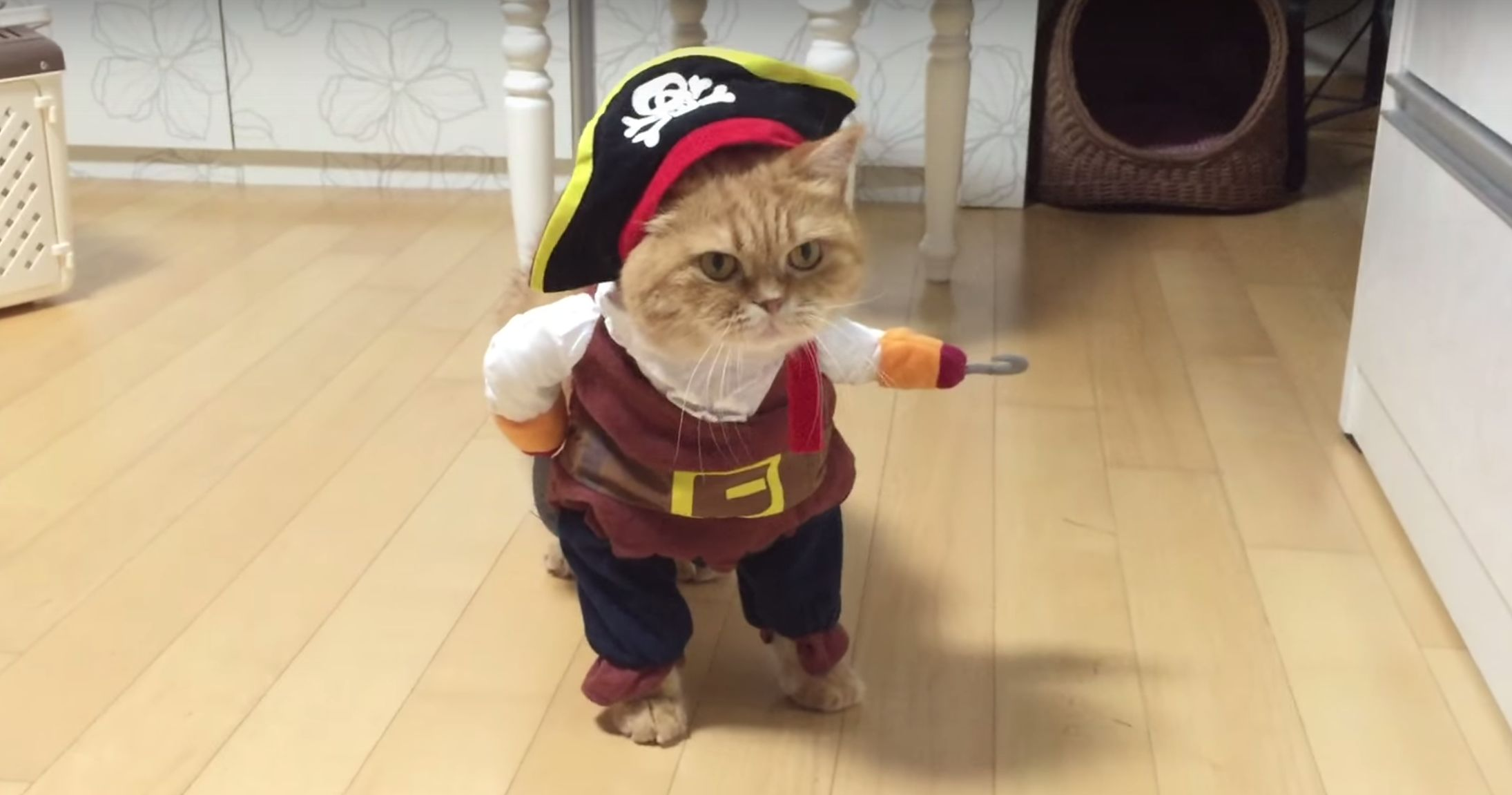 Pirate x gif pron famous hoe