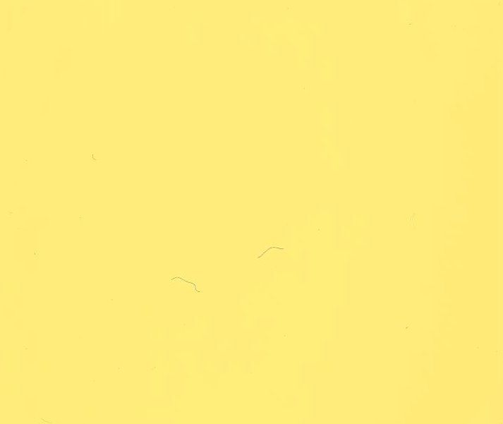 Light Lemon Yellow Paint Color Numberedtype