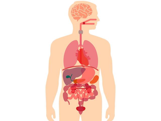 Do You Know Basic Human Anatomy? | Playbuzz